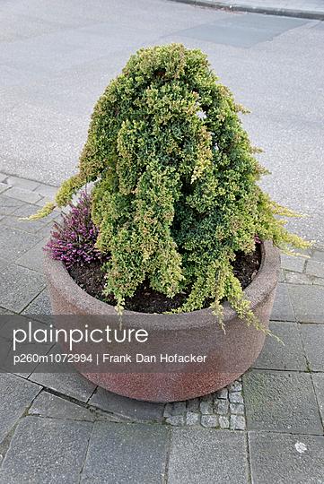 Blumenkübel - p260m1072994 von Frank Dan Hofacker