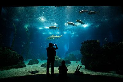 Oceanarium - p1028m933877 by Jean Marmeisse