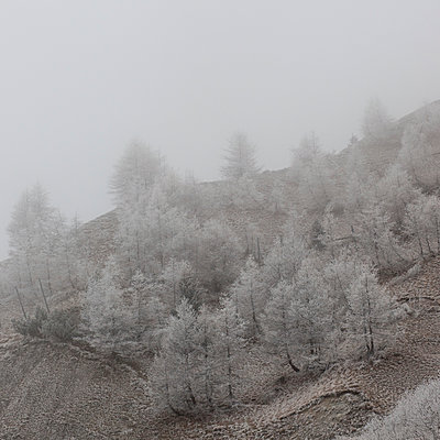Frozen trees in the mountain 4 - p1138m953562 by Stéphanie Foäche