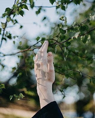 Woman's hand touching branch - p1184m1462618 by brabanski