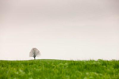 Der einsame Baum - p7980070 von Florian Loebermann