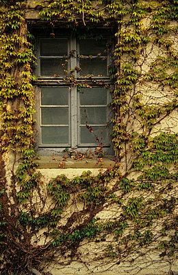 Mit Efeu bewachsenes Haus - p9791338 von Opelka
