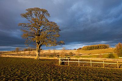 Sunshine and dark clouds - p1057m959287 by Stephen Shepherd
