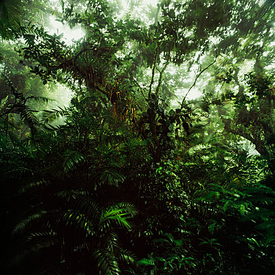 Cloud forest, Nicaragua - p844m880793 by Markus Renner