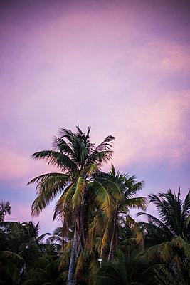 Palm tree against purple sky - p1296m1527693 by Jean-François Brière
