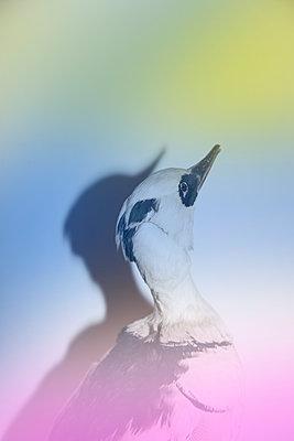 Bunter Vogel - p1514m2275714 von geraldinehaas