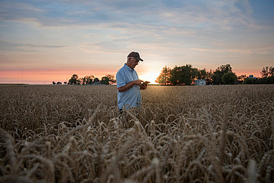 Distant Caucasian man using digital tablet in field of wheat - p555m1522995 by John Fedele