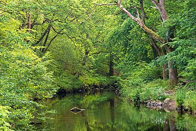 Verdant summer foliage along the banks of the River Teign at Fingle Bridge, Dartmoor, Devon, England, United Kingdom, Europe - p871m1082173 by Adam Burton