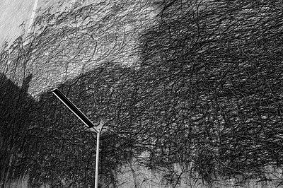 Backyard - p1171m994019 by SimonPuschmann