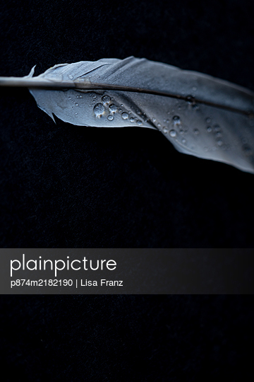 Water drops on feather - p874m2182190 by Lisa Franz