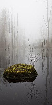 Kaltenhofer Moor , Dänischer Wohld, Rendsburg-Eckernförde, Schleswig-Holstein, Deutschland - p1316m1160980 von Lukas Wernicke