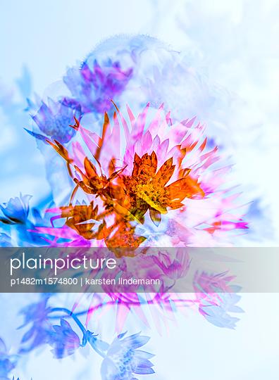 Pflanzen - p1482m1574800 von karsten lindemann