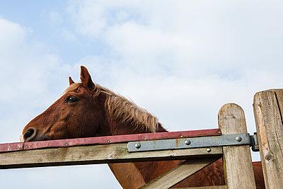 Pferd hinter einem Holzgatter - p1057m1440435 von Stephen Shepherd