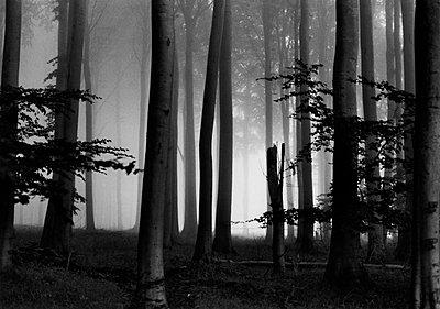 Fog in the forest - p1648m2228472 by KOLETZKI