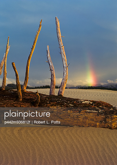 Driftwood on the sand with a rainbow in the distance; Lakeside, Oregon, United States of America - p442m936812f by Robert L. Potts