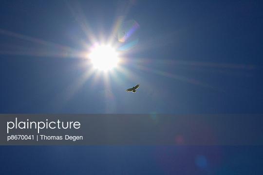 Buzzard - p8670041 by Thomas Degen