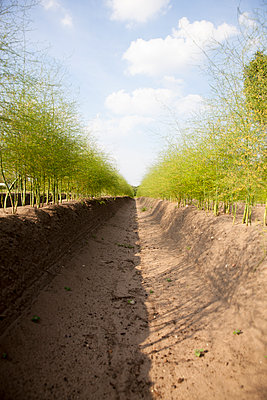 Green asparagus - p902m1065124 by Mölleken