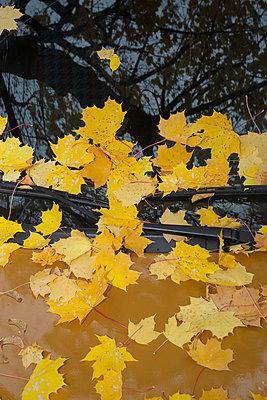 Autumn leaves - p1149m1071448 by Yvonne Röder