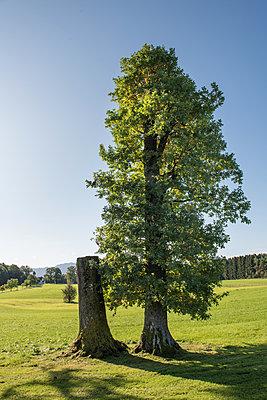 Bäume - p954m1480757 von Heidi Mayer