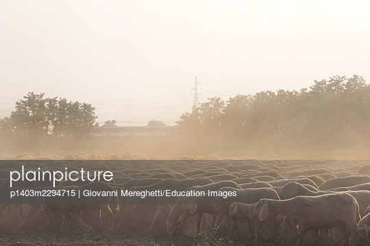 Sheeps - p1403m2294715 by Giovanni Mereghetti/Education Images
