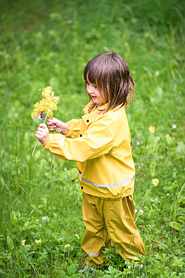 Little girl picking flowers - p1418m2007561 by Jan Håkan Dahlström