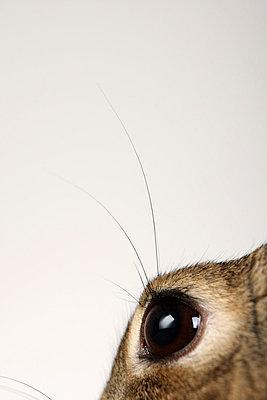 Kaninchen im Studio - p4030816 von Helge Sauber