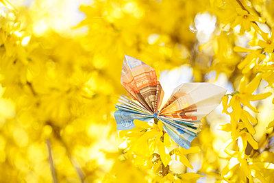 Butterfly, folded money - p715m2173239 by Marina Biederbick