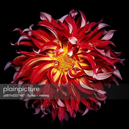 flames - p587m2227487 by Spitta + Hellwig