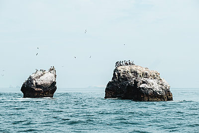 A flock of birds on sea rocks, Islas Ballestas,Paracas,Peru - p1166m2095820 by Cavan Images