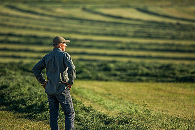 Caucasian farmer standing in field checking crop - p1427m2162356 by Steve Smith
