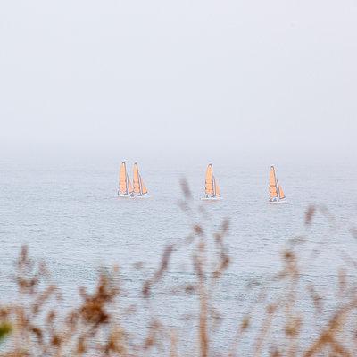 Four sailing boats - p606m970601 by Iris Friedrich