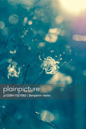 Sunlight through wild flowers - p1228m1527683 by Benjamin Harte
