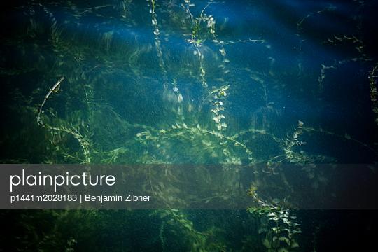 Unterwasserpflanze - p1441m2028183 von Benjamin Zibner