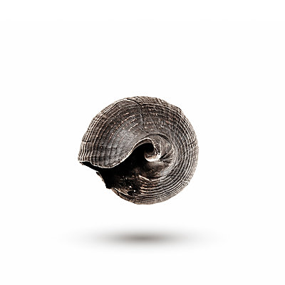 Mussel shell - p910m2182361 by Philippe Lesprit