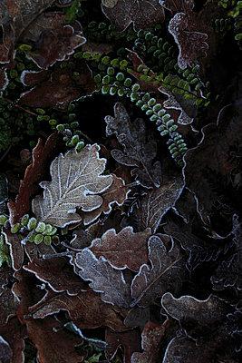 Frozen plants - p8490015 by Eric Zeziola