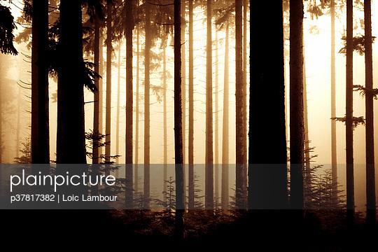 p37817382 von Loic Lambour