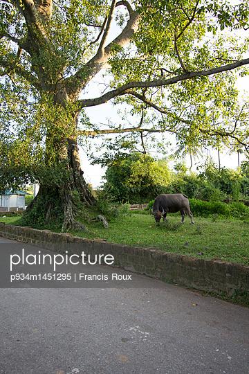 p934m1451295 von Francis Roux