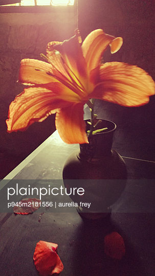 Daylily in a flower vase - p945m2181556 by aurelia frey