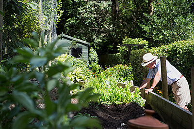 Senior man working in garden, Bournemouth, County Dorset, UK, Europe - p1026m996451f by Patrick Frost