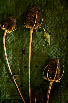 Thistles - p1331m1169248 by Margie Hurwich