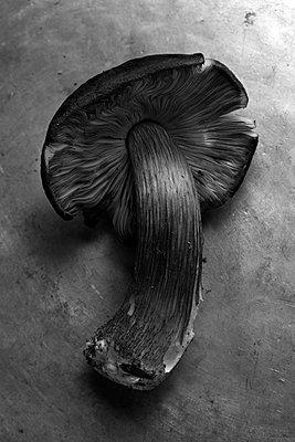 Single mushroom, close-up - p1366m2260590 by anne schubert
