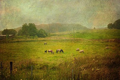 Sheep and ponies on pasture, Wuppertal, Germany - p300m1010146 by Dirk Wüstenhagen