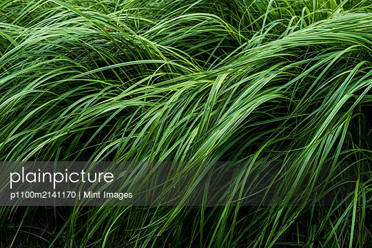 p1100m2141170 von Mint Images
