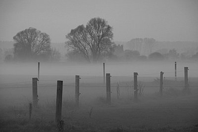 Ländliche Umgebung im Nebel - p473m670497f by STOCK4B-RF