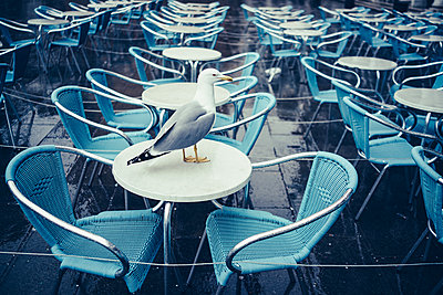 Empty restaurant table - p1053m1578263 by Joern Rynio