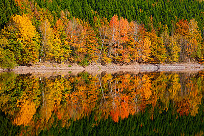 Germany, autumn forest, water reflection - p300m2060841 by Thomas Jäger