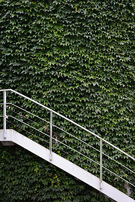 Germany, Munich, exterior wall vegetated with wild wine and white stairs - p300m998628f by Axel Ganguin