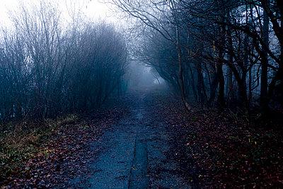 Muddy path in foggy landscape - p3883225 by Bill Davies
