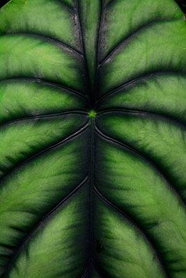 Blatt grün 15 - p876m2100304 von ganguin