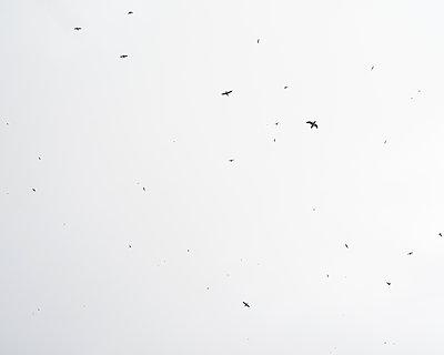 Papageitaucher am Himmel - p1124m1060257 von Willing-Holtz